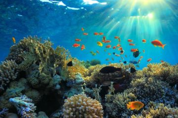 Dykkerkursus 2020 – Open Water