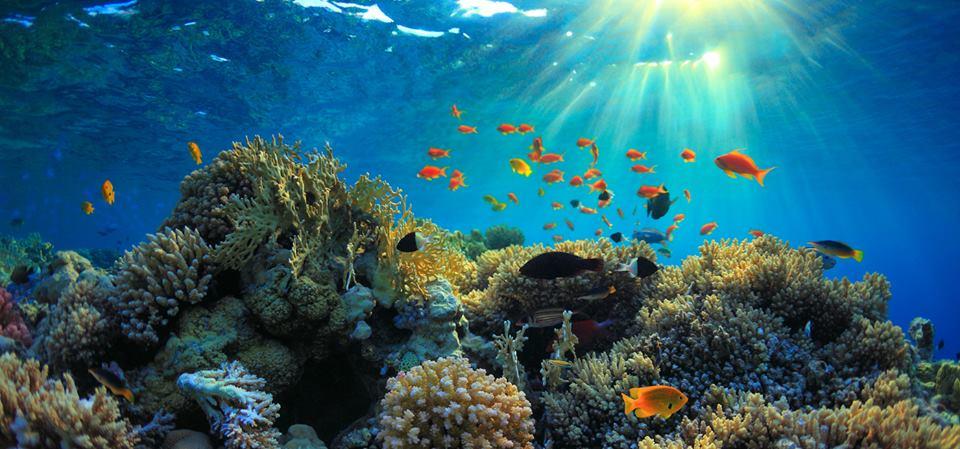 Snorkleudflugt til Tiran Øen fra Sharm El Sheikh