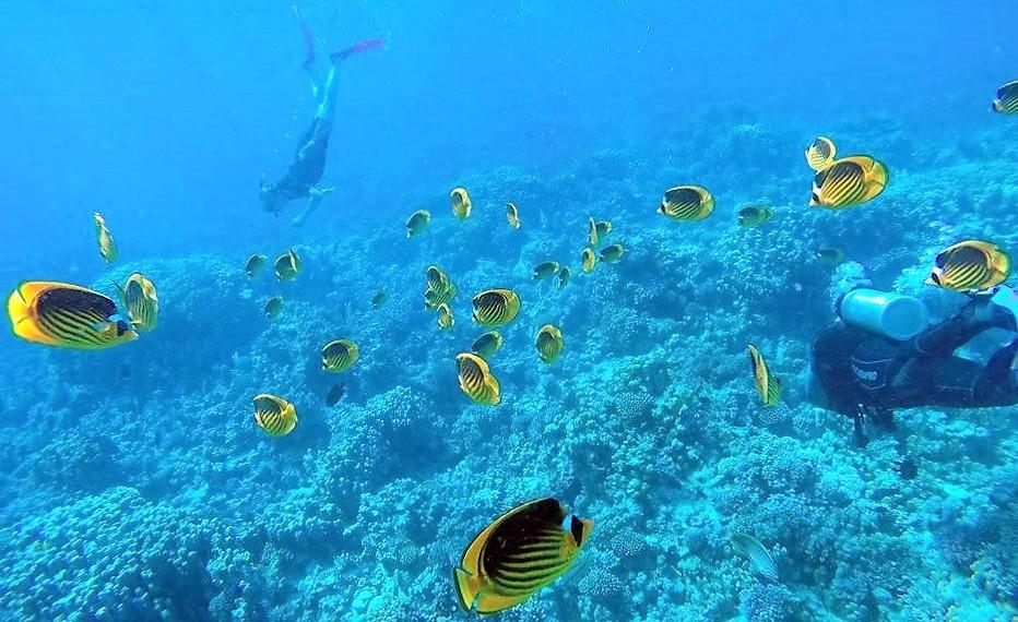 Snorkleudflugt til Giftun-øen