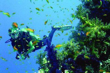 Dykkerkursus - Open Water