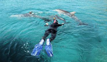 Schnorchelausflug zum Dolphin House