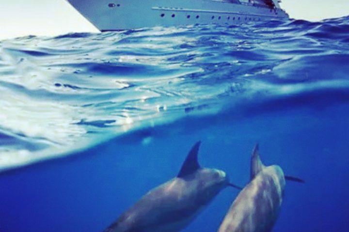 Snorkleudflugt til Dolphin House