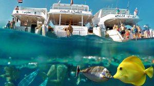 Hurghada - Snorkleudflugt til Mahmya-Øen