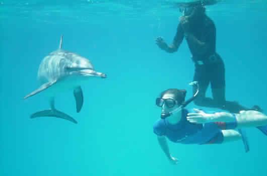Snorkleudflugt til Delfin hus