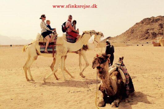 Ørken udflugter