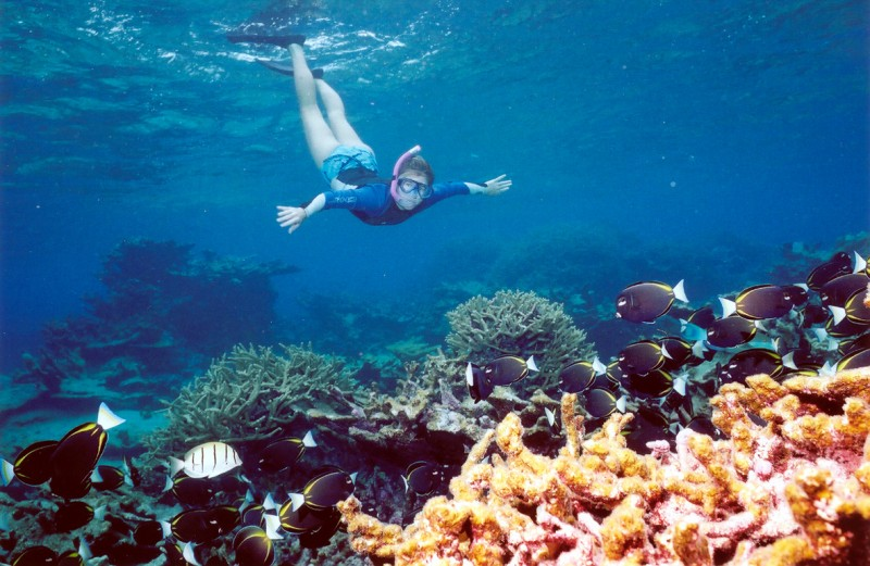 Snorkeling excursion to Tiran Island