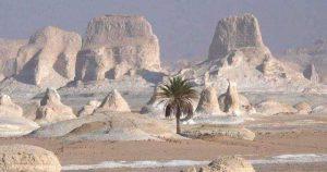 Farafra oasen