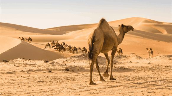 Farafra Oasen Egypten